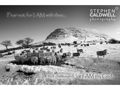 Slemish Sheep - John 10v28