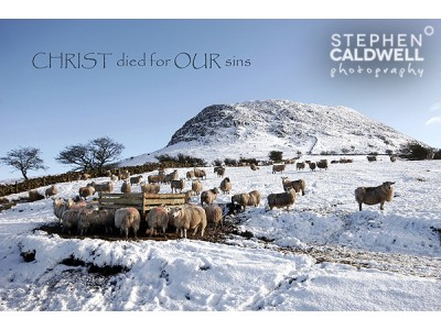 Slemish Sheep - Christ died for our sins